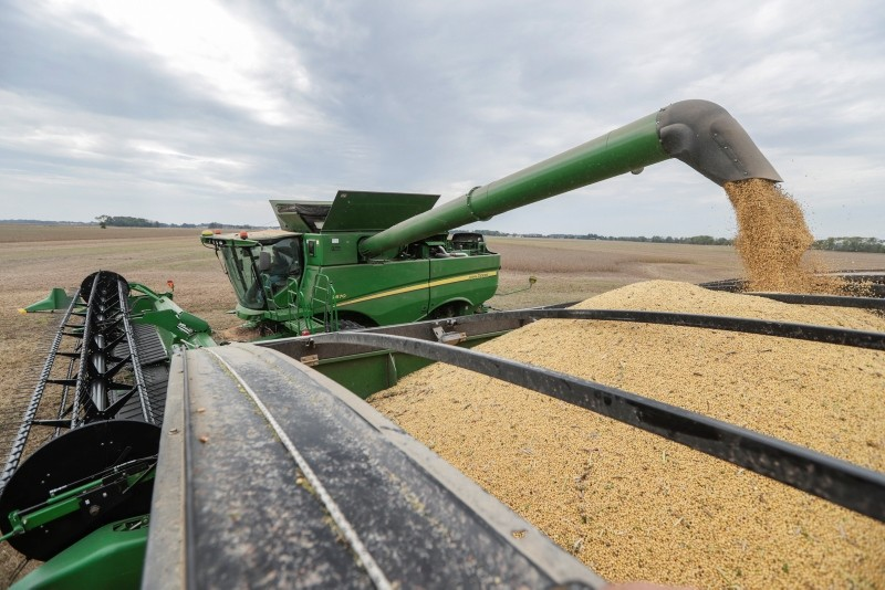 Mike Starkey offloads soybeans from his combine as he harvests his crops in Brownsburg, Ind., Friday, Sept. 21, 2018. (AP Photo)