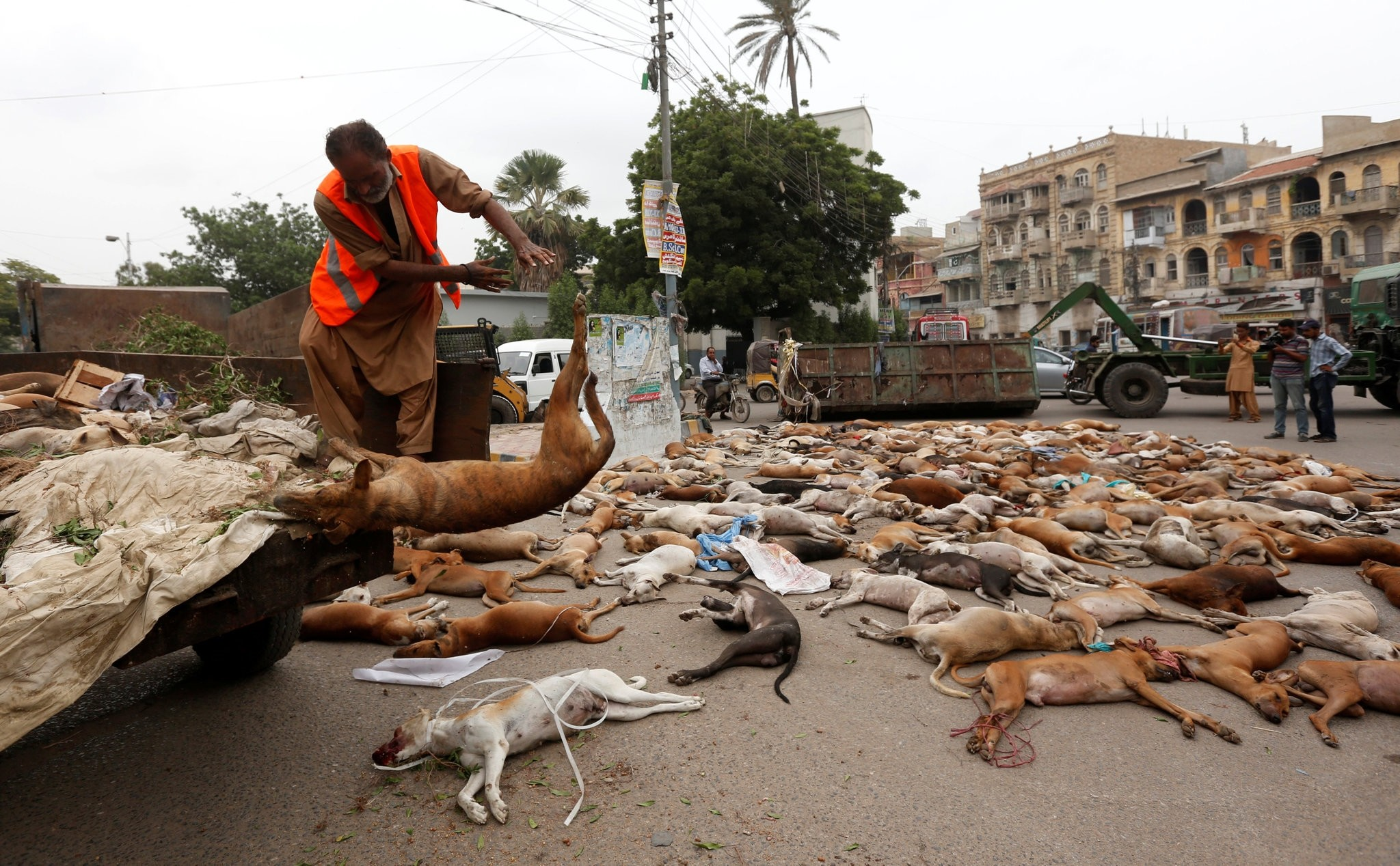 Municipality workers conduct such drives on a routine basis in which dozens of stray dogs are killed across the largest metropolis Karachi. (EPA Photo)