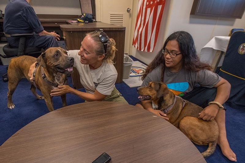 A handout photo released on October 28, 2017 by the US Navy shows American mariners Jennifer Appel (C) and Tasha Fuiava (R) answering questions during a media call with their dogs (AFP Photo)