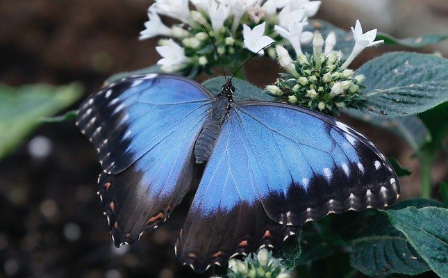 Britain has a summer job for you: Count the butterflies