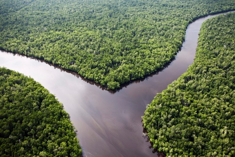 A handout picture released by Greenpeace on 21 March 2012 and taken on 28 February 2012 shows untouched forest in the Sungai Sembilang National Conservation Park in South Sumatra, Indonesia. (EPA Photo)