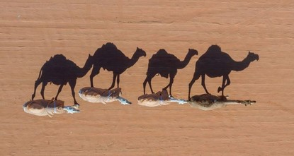 Australia orders snipers to kill 10,000 camels amid water crisis