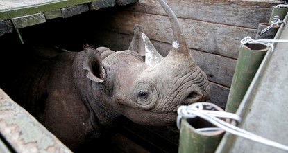 Kenyan minister under fire over death of 10 rhinos in transfer fiasco