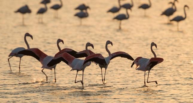 Сотни видов птиц ожидают посетителей в турецком «Птичьем раю»