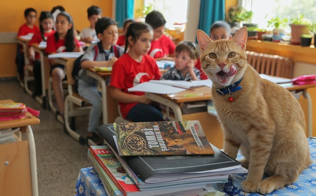 Classroom pet Tombi the Cat inspires book series for children