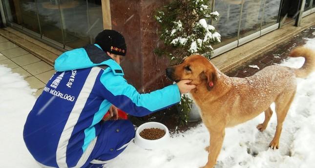 Locals, municipalities around Turkey keeping stray animals safe in harsh winter