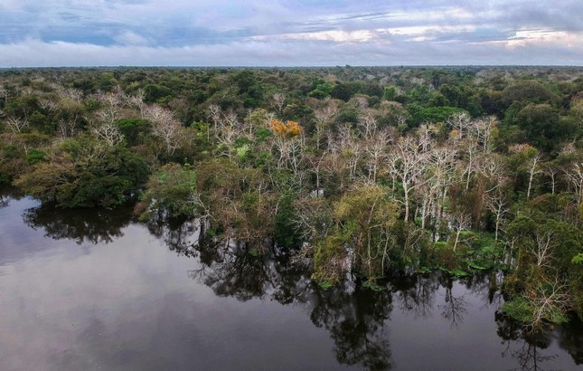 This Feb. 23, 2017 file photo shows the Jaraua river flowing through the Mamiraua Sustainable Development Reserve in Amazonas State, Brazil. (AFP Photo)