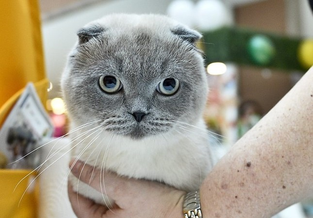 Cats descend on Istanbul to compete in cuteness