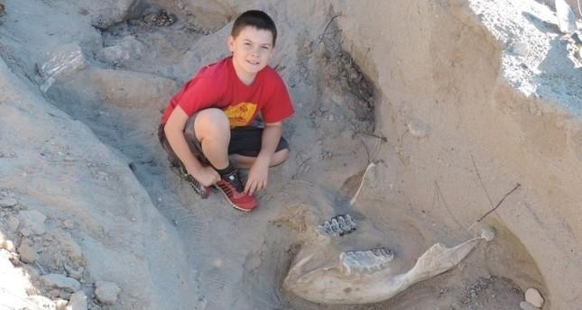 Ein neun jähriger Junge entdeckt ein Millionen Jahre altes Fossil