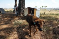 Edirne's animal lovers make sheds ahead of winter