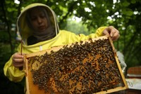 Turkey one of world's few self-sufficient beekeepers: official