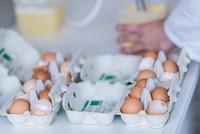 Fipronil in Eiern aus den Niederlanden festgestellt