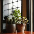 Mythbusters: Houseplants don't actually purify the air