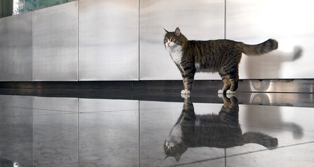 CHP's mascot cat Şero returns to party headquarters after week-long treatment