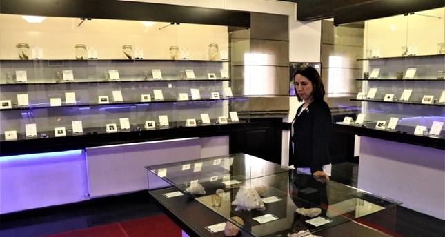إسبارطة التركية تحتضن أول متحف للأحياء المائية في البلاد