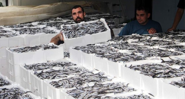 Local fishermen carry crates of European anchovies they caught in the Black Sea, Nov. 1, 2019. (AA Photo)