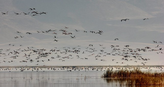 Migratory birds at Sultan Reeds National Park in Kayseri.