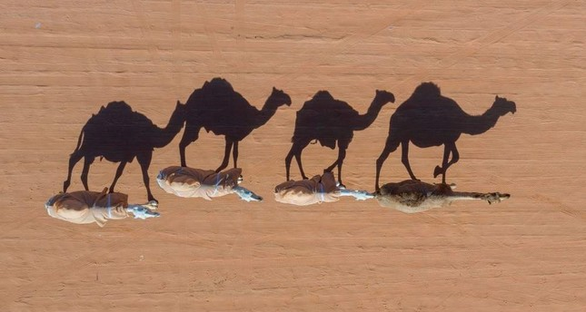 Camels are photographed by a drone in Rumah, some 160 kilometers east of Riyadh, on Jan. 7, 2020. AFP Photo