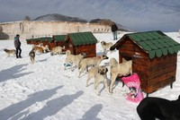 Niğde opens 'Dog Village' to shelter stray pooches from harsh winter conditions