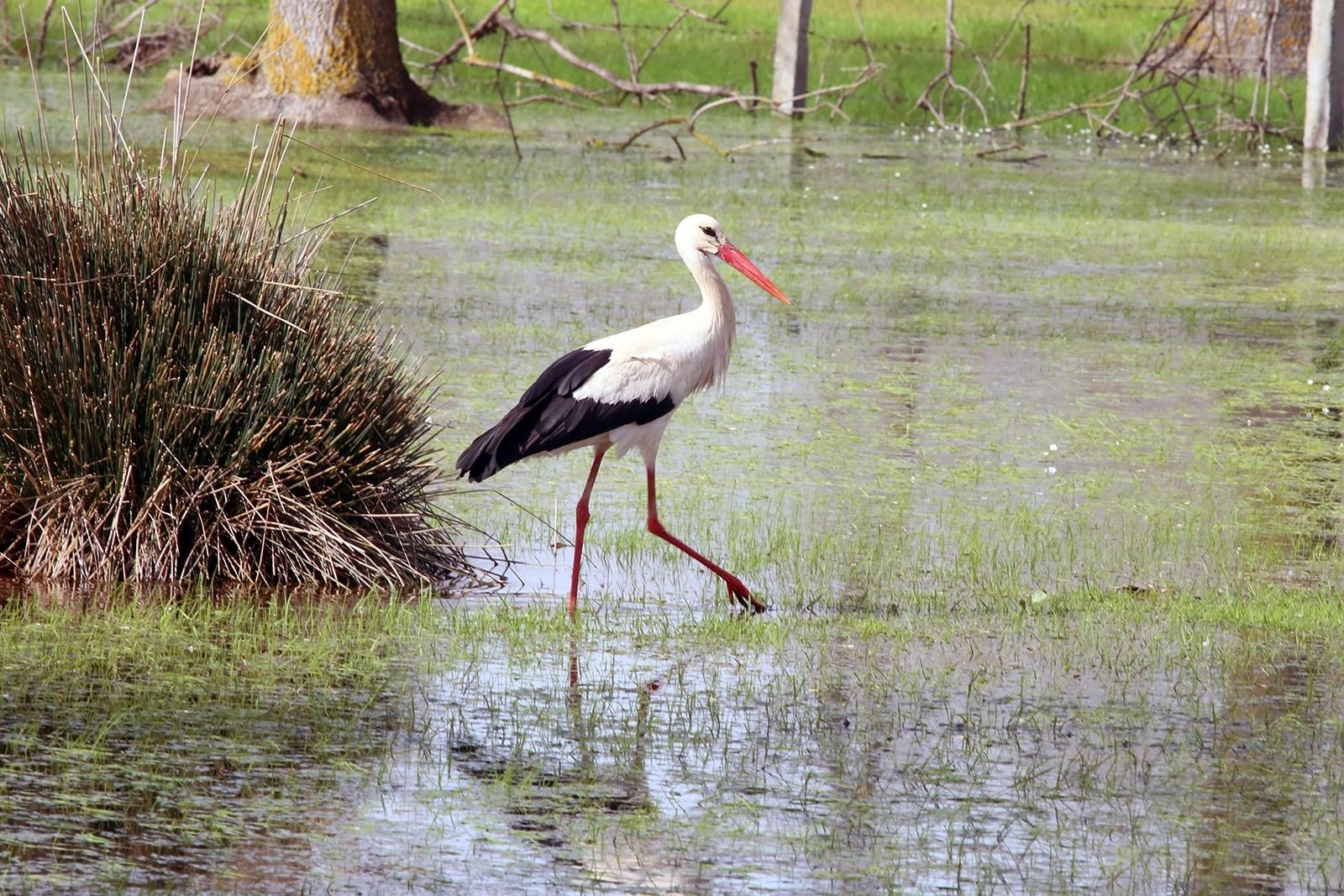 Kızılırmak Delta Wetland and Bird Sanctuary springs to life