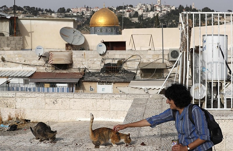 Tova Saul, an Orthodox Jew, feeds stray cats in a neighbourhood in Jerusalem's Old City, on July 12, 2017