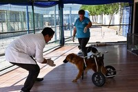 Paralyzed dogs receive treatment at clinic in western Turkey