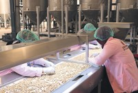 Europe's largest pistachio processing plant established in Siirt