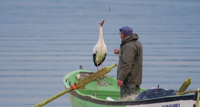 Adem Yılmaz and Yaren the stork pictured at Lake Uluabat in Turkey's Bursa province, March 1, 2019 (IHA Photo)