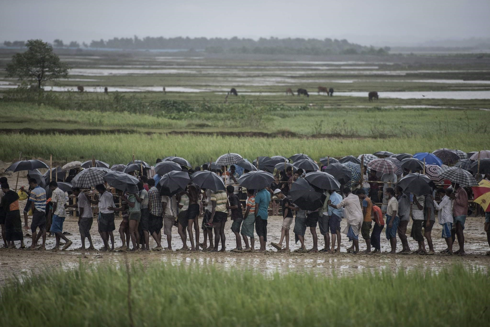 Rohingya Muslim refugees wait in line in the rain for food at the Nayapara refugee camp, Bangladesh.