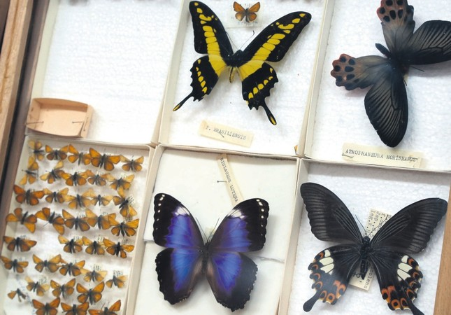 Insect museum in Erzurum exhibits Turkey's biodiversity