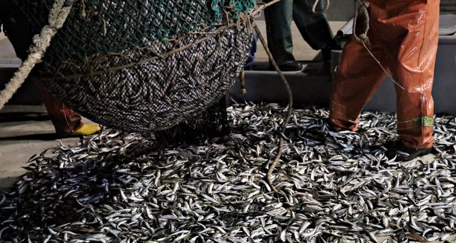 Over fishing puts fish species and populations in danger.