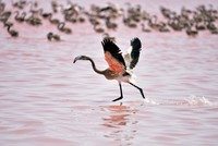 Hatching flamingos turn Salt Lake into scene of hope