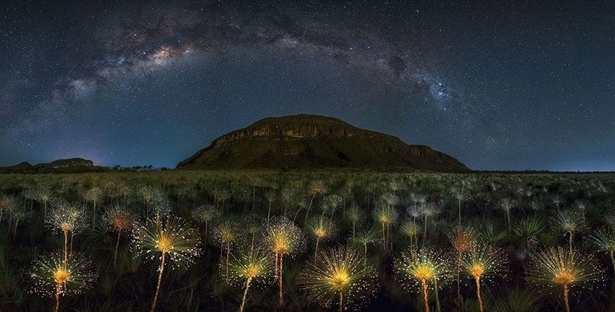 Cosmic Wildflowers, Brazil  - Honorable Mention in The Beauty Of The Nature