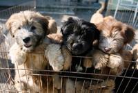 South Korea shuts down largest dog slaughterhouse complex