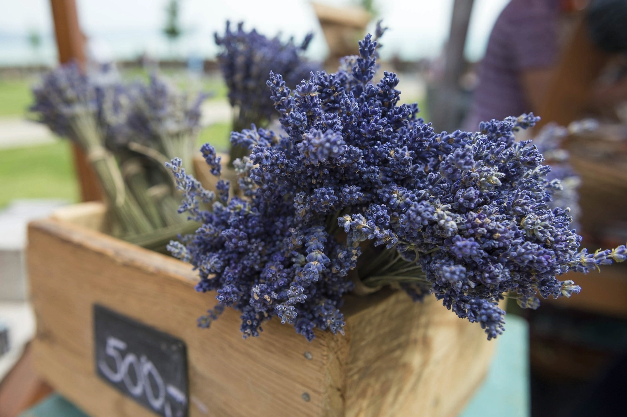 Used in several forms for herbal treatment, lavender is highly rich in Vitamin A and C, the antioxidants.