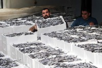 New Turkish law to push sustainable fishing