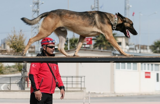 Search & rescue dogs are trained for two years to be fully equipped for a mission. Although they are cute, they don't hesitate risking their lives to save others. The photo taken at the training center in İzmir shows one of the dogs with his trainer.