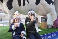 Got milk? 'Smart cow' project in Gümüşhane draws attention
