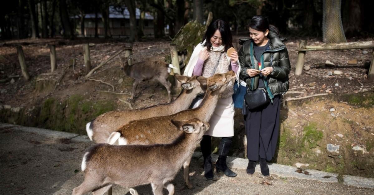 This file picture taken on December 7, 2018 shows tourists feeding deer at Nara park in Nara (AFP File Photo)