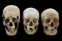 'Exotic' skulls show women, not just men, migrated across medieval Europe