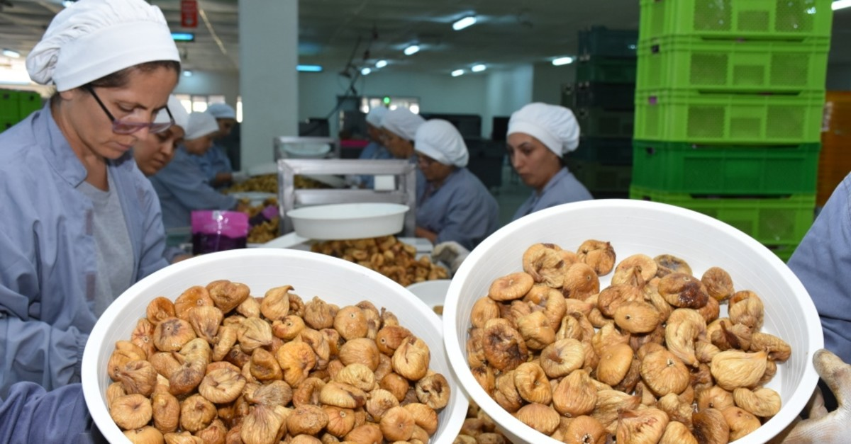 Turkey ranks first in the world in dried fig production and trade.