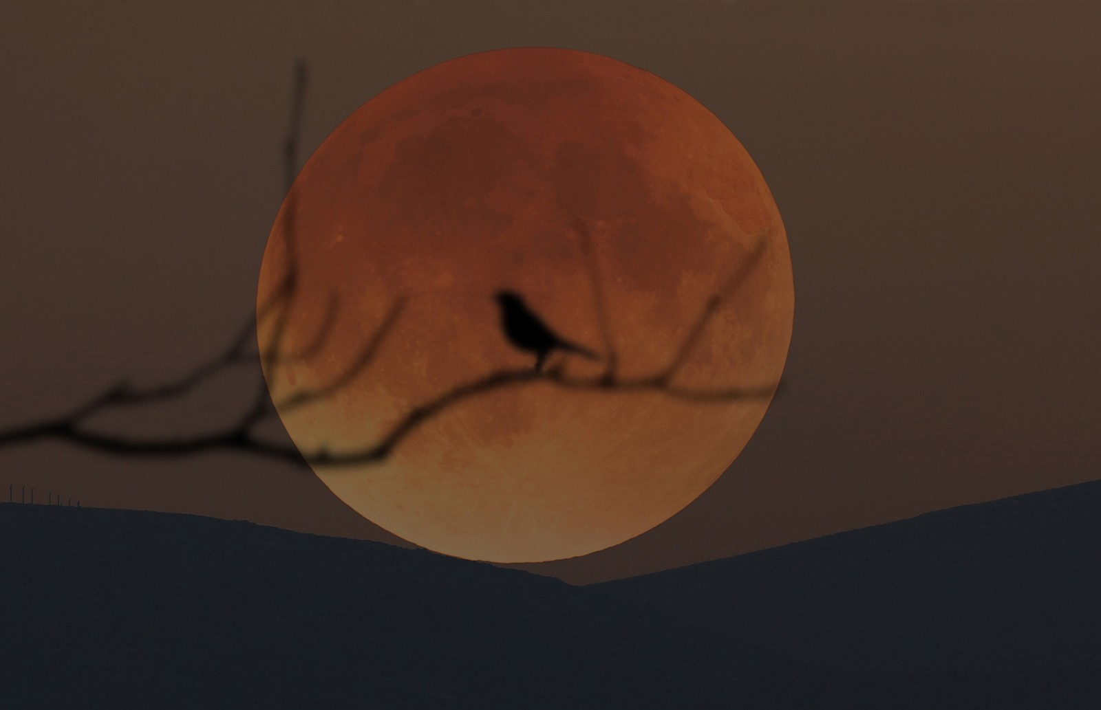 A bird pictured on a tree branch during supermoon in Turkey's Konya province (AA Photo)