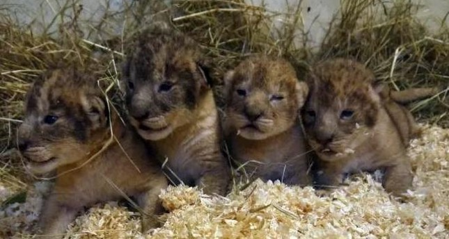 emSource: Boras Djurpark Zoo/em