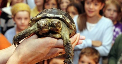 pThe main star at a museum in Geneva, a two-headed tortoise named Janus, will celebrate its 20th birthday on Sunday./p  pThe tortoise likely would not have survived so long in the wild due to its...