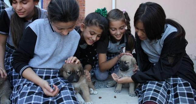Middle school students pet stray dogs, Amasya, Oct. 21, 2019 AA Photo