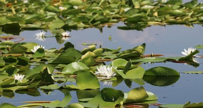 Lake covered in water lilies perfect summer getaway