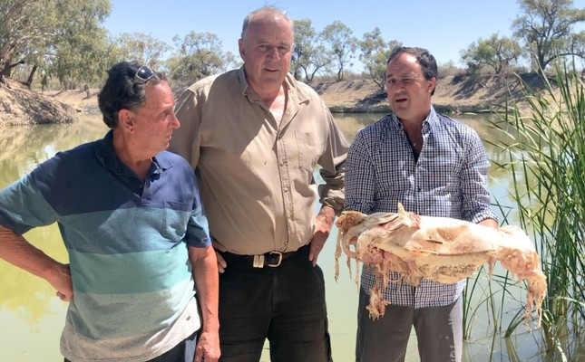 This screen grab taken from video taken on January 10, 2019 released by the office of independent New South Wales member of parliament Jeremy Buckingham on January 11 shows Buckingham (R) holding a decades-old native Murray cod (AFP Photo)