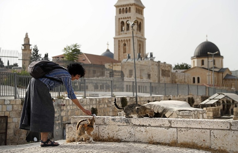 Tova Saul feeds stray cats in a neighborhood in Jerusalem's Old City, on July 12, 2017