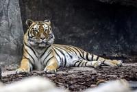 حديقة كبيرة للقطط الكبيرة: افتتاح حديقة حيوان مخصصة للأسود في إسطنبول