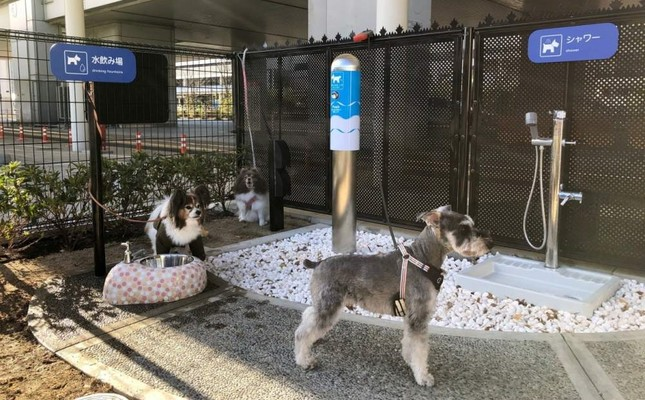 Japanese airport introduces first 'bathroom' for traveling dogs